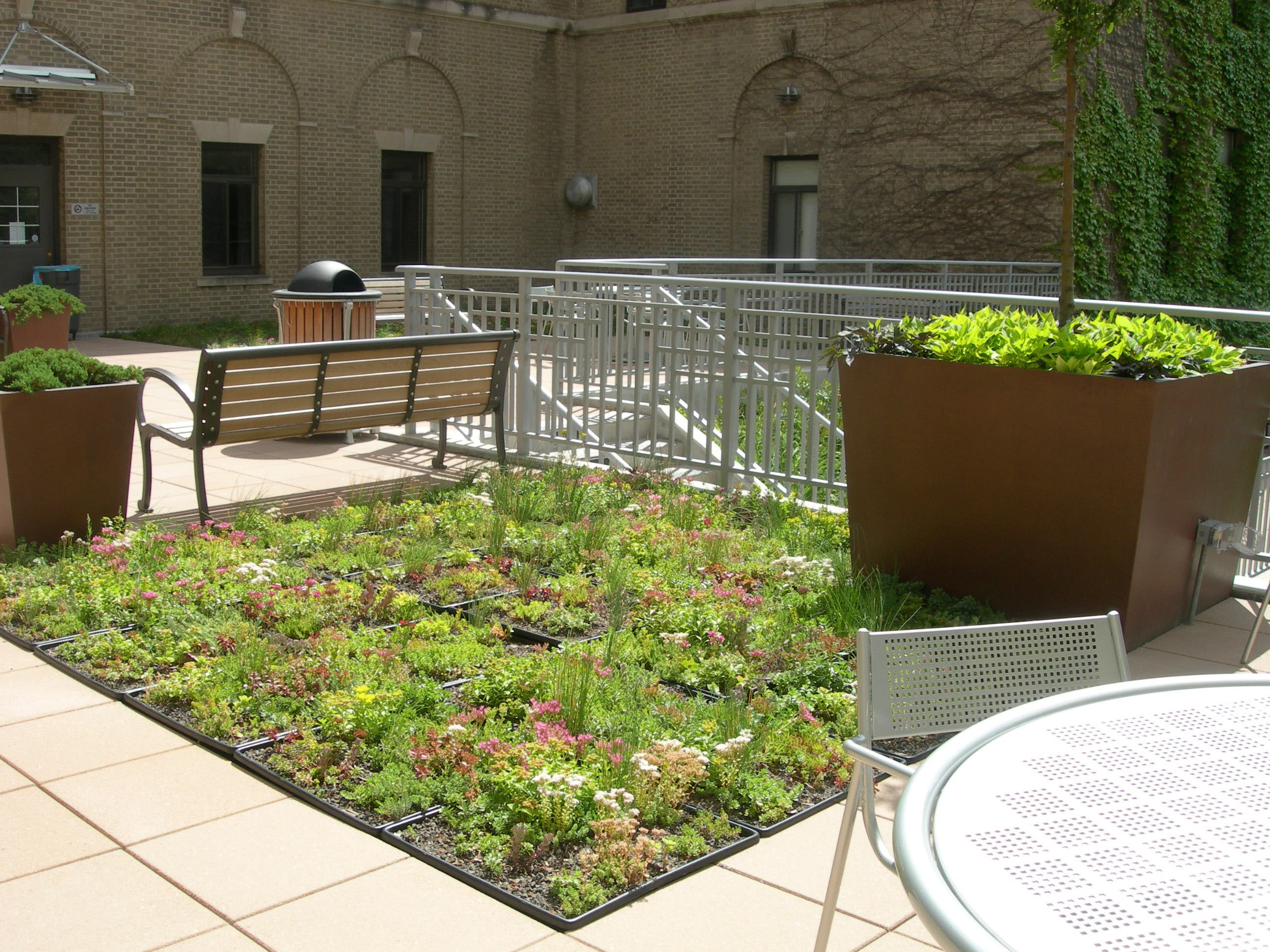 Mann Library Green Roof
