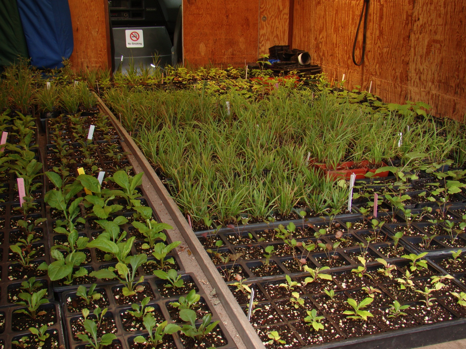 Seedlings in a greenhouse