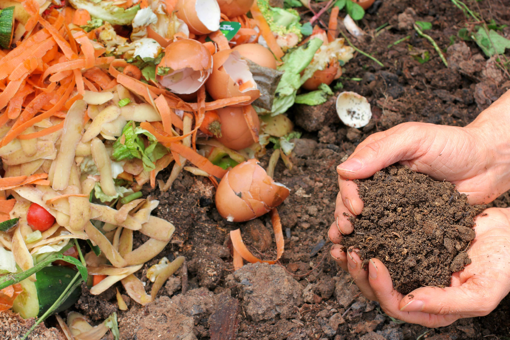Pile of compostable food scraps