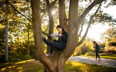 Student studying in a tree