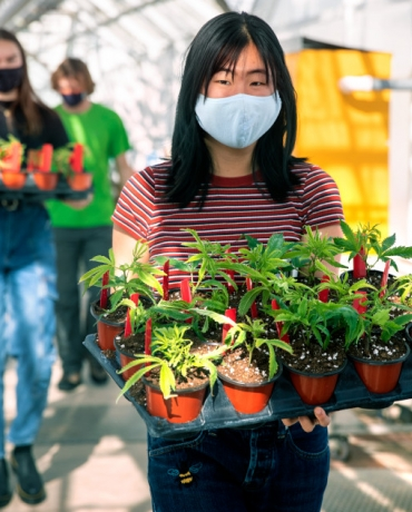 Students carrying pots in a greenhouse at Cornell, wearing masks during COVID19